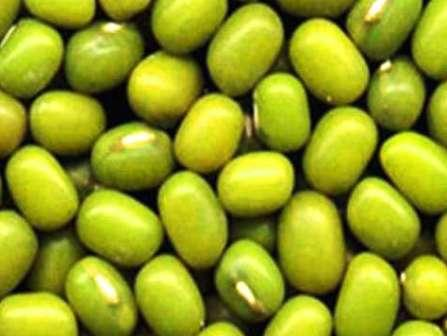 Mung bean (sprouting type) - Rocbean Atmsndotcom