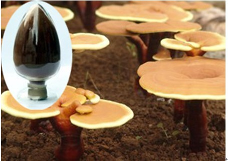 High purity glossy ganoderma extract - huize15
