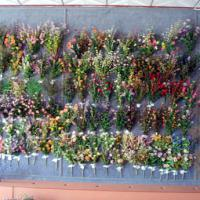 Large picture Artificial flowers and plants