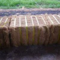 Large picture COCONUT FIBER/COIR FIBRE