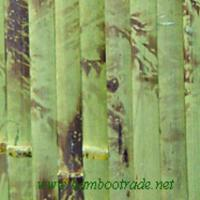 Large picture 2.5cm green tortoise bamboo wallpaper
