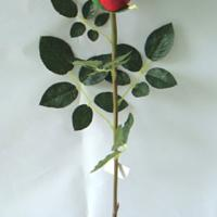 Large picture Artificial Flowers: Rose