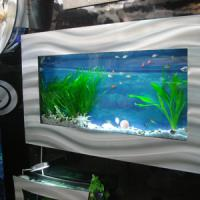 Large picture wall aquarium