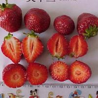 Large picture IQF STRAWBERRY
