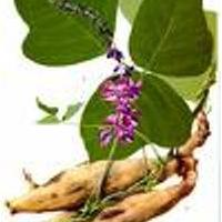 Large picture Kudzu root extract