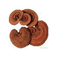 Large picture supply -- Reishi mushroom Extract 10%-65%Polysacch