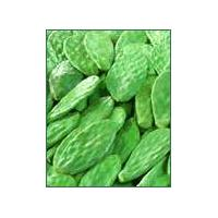 Large picture cactus extract (info3@sports-ingredient.com)