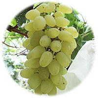 Large picture white grape Juice Concentrate
