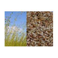 Large picture Flaxseed Hull Extract 20%~80% Flax Lignans SDG