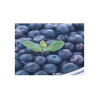 Large picture Blueberry Anthocyanin