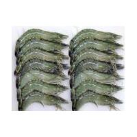 Large picture Frozen Black Tiger Shrimp HOSO
