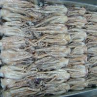 Large picture Frozen Seafood_Squid Tentacles