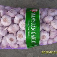 Large picture normal white garlic