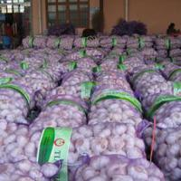 Large picture Shandong garlic