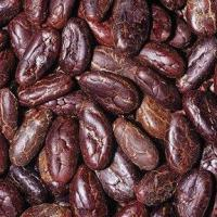 Large picture COCOA BEANS SEED