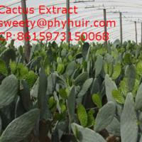 Large picture Cactus Extract  radiation protection