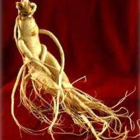 Large picture Ginseng Root P.E