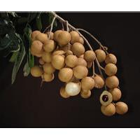 Large picture Longan aril extract