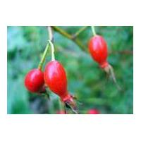 Large picture Rose hip concentrate