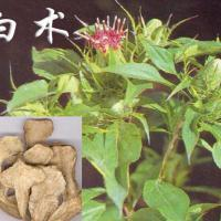 Large picture White Atractylodes extract
