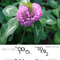 Large picture Red Clover Extract 8%-40%Isoflavones