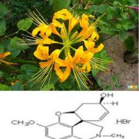 Large picture Shorttube Lycoris extract 99%Galanthamine HBr
