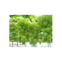 Large picture grape seeds extract
