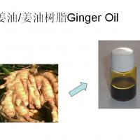 Large picture ginger oleoresin