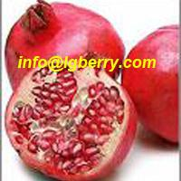Large picture Pomegranate extract