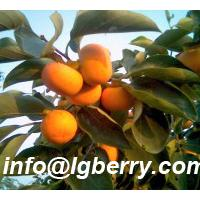 Large picture Persimmon Leaf Extract