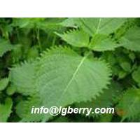Large picture Perilla Leaf extract