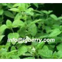 Large picture Peppermint Leaf extract