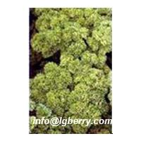 Large picture Parsley Extract