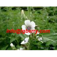 Large picture Marshmallow root extract