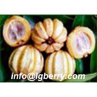 Large picture Garcinia Cambogia Extract