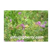 Large picture Alfalfa Extract Lucerne