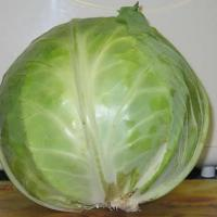 Large picture Lettuce