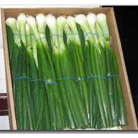 Large picture Spring Onions