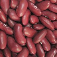 Large picture Dark Red Kidney Beans