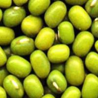 Large picture Mung bean (sprouting type)