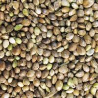 Large picture Hempseeds