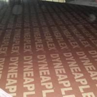 Large picture Dynea Film Faced Plywood