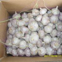 Large picture pure white garlic