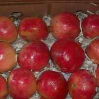Large picture Fresh Pomegranate