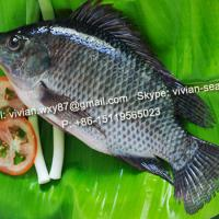 Large picture China Frozen Black Tilapia Fish