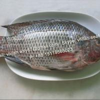 Large picture Frozen Black Tilapia Fish Whole Round