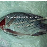 Large picture China Frozen Black Tilapia Fish Gutted and Scaled