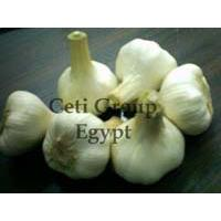 Large picture garlic