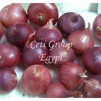 Large picture red onion