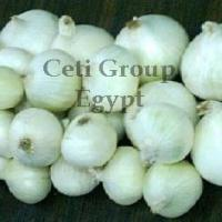 Large picture white onion